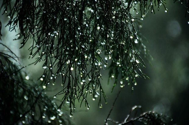 close-up-photography-of-wet-leaves-913807